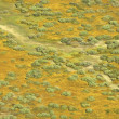 Aerial prairie landscape. - Stock Photo