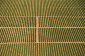 Aerial view of farmland with rows of crops. — Stock Photo