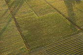Aerial of crops. — Stock Photo
