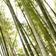 Stock Photo: Bamboo forest.