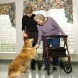 Elderly woman with therapy dog. - Stock Photo