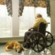 Elderly Min Wheelchair and dog — Zdjęcie stockowe #9364306