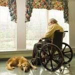Elderly Man in Wheelchair and dog — Stock Photo