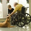 Stock Photo: Min wheelchair with dog.