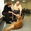 Foto Stock: Elderly Mwith WomPetting Dog