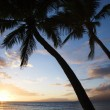 Maui sunset with palm trees. — Stock Photo