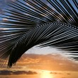 Maui sunset with palm tree. — Stock Photo