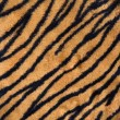 Stock Photo: Tiger print carpet.