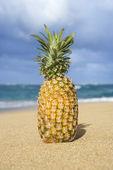 Pineapple on tropical beach. — Stock Photo
