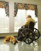 äldre man i rullstol och hund — Stockfoto
