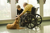 Man in wheelchair with dog. — Stock Photo