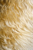 Dog fur close up. — Stock Photo
