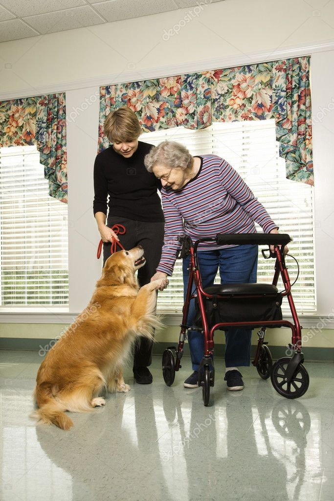 Elderly Caucasian woman using walker and middle-aged daugher petting dog in hallway of retirement community center.  Stock Photo #9364299