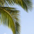 Stock Photo: Palm tree and sky.