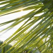 Stock Photo: Close up of palm frond.