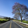 Road with Jacaranda tree in Maui. - Stock Photo