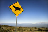 Cow crossing sign in Maui, Hawaii. — Stock Photo