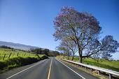 Road with Jacaranda tree in Maui. — Stock Photo
