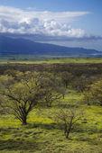 Maui, Hawaii. — Stockfoto
