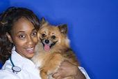 Woman veterinarian holding brown dog. — Stock Photo