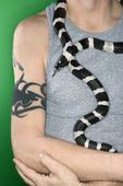 California Kingsnake draped around man. — Stock Photo