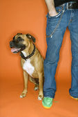 Young man with Boxer dog. — Stock Photo