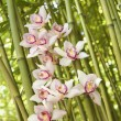 Stock Photo: Orchids and Bamboo Stalks