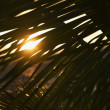 Stock Photo: Palm leaf against sunset.