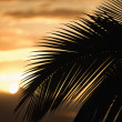 Palm against sunset in Maui. — Stock Photo