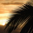 Palm against sunset in Maui. - Stock Photo