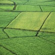 Aerial of crop fields. - Stock Photo