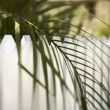 Stock Photo: Palm leaf over picket fence.