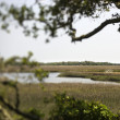 Stock Photo: Wetland marsh coastal landscape.