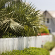 Stock Photo: White picket fence with palms.