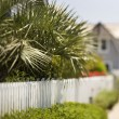 White picket fence with palms. — Stock Photo #9435406