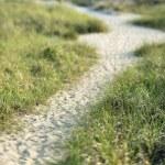 Path to beach. — Stock Photo