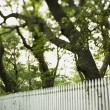 White picket fence with trees. — Stock Photo #9435433