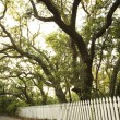 Stock Photo: White picket fence with trees.
