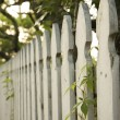 Stock Photo: White picket fence.