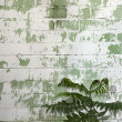 Stock Photo: Weathered wall and plant.