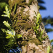 Moss growing on tree. - 