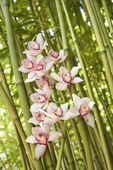 Orchids and Bamboo Stalks — Stock Photo