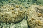 Underwater rocks in Maui, Hawaii. — Stock Photo