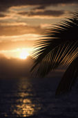 Palm at sunset in Maui. — Stock Photo