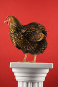 Chicken standing on column. — Stock Photo