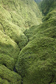 Maui Rainforest. — Photo