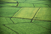 Aerial of crop fields. — Stock Photo