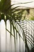 Palm leaf over picket fence. — Stock Photo