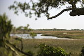 Wetland marsh coastal landscape. — Stock Photo