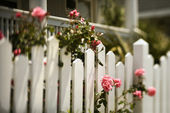 Roses growing over fence. — Stock Photo